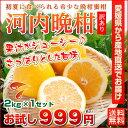 河内晩柑 愛媛産 訳あり 和製グレープフルーツ 2kg×1箱 2セット目から増量