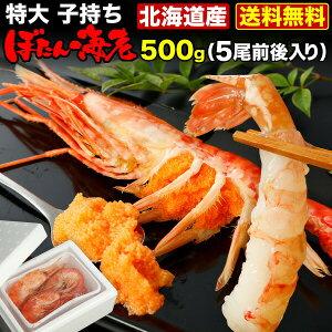 北海道産 お刺身用天然 特大 子もちボタン海老 2Lサイズ 500g(5尾前後)送料無料 産地直送