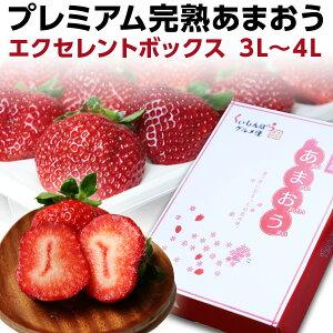 ギフト ex ポイント10倍 福岡産 プレミアム 大粒完熟 9〜12粒 いちご 苺 イチゴ 農家直送