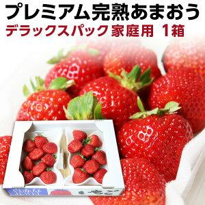 あまおう 福岡産 完熟あまおう280g以上×2パック いちご 苺 ご家庭用 農家直送 デラックスパック 1箱 産地直送