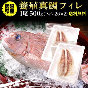 鯛 刺身 フィレ マダイ 真鯛 フィレ 1尾(皮無し)2枚×2 500g 送料無料 海鮮 魚介 冷凍 真空パック 応援セール