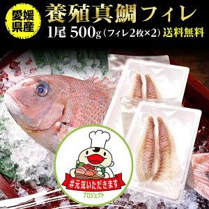 鯛 刺身 フィレ マダイ 真鯛 フィレ 1尾(皮無し)2枚×2 500g 送料無料 海鮮 魚介 冷凍 真空パック 応援セール【#元気いただきますプロジェクト】