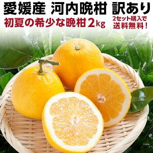 河内晩柑 愛媛産 訳あり 和製グレープフルーツ 初夏のフルーツ 2kg 産地直送