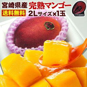 父の日 ギフト 果物 フルーツ マンゴー 宮崎 ポイント5倍 完熟 父の日のプレゼント ご自宅用でも 完熟マンゴー特大2L玉(350g以上) JA西都協賛 光センサー完全選果 mango