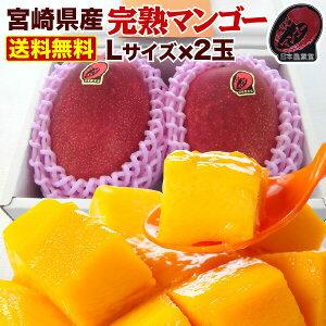 お中元 ギフト プレゼント 果物 フルーツ マンゴー 宮崎 L玉2玉 620g以上 光センサー選果 糖度12度以上