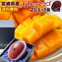 母の日 果物 フルーツ ギフト マンゴー 宮崎マンゴー 太陽のタマゴ 初夏のフルーツ 2L玉(350〜449g) 太陽のたまご JA…