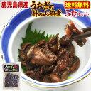 バレンタイン うなぎ 国産 鹿児島県 肝の山椒煮 70g×5袋(ウナギ 鰻 蒲焼き 国内産)