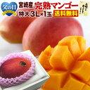 マンゴー 宮崎マンゴー 父の日ギフト 完熟マンゴー特大3L玉(450g以上) JA西都協賛光センサー完全選果 ポイント5倍mango