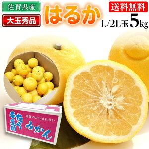 佐賀 はるか みかん 大玉秀品 L/2L 5kg 蜜柑 送料無料 糖度13度以上 果物 フルーツ 産直
