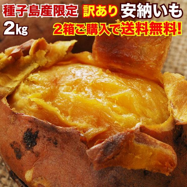 さつまいも 安納芋 訳あり 鹿児島 種子島産 安納いも 蜜芋 MLサイズ限定 2箱以上 送料無料 生芋(さつまいも)