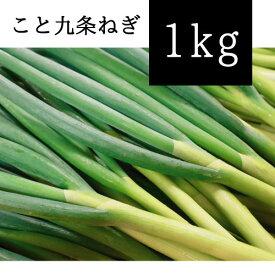 京都府産 こと九条ねぎ 1kg (根切り原体バラ) ※送料込み価格となっております
