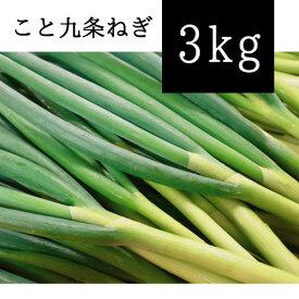 京都府産 こと九条ねぎ 3kg (根切り原体バラ)