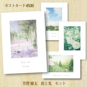 ポストカード 4枚 セット「花と光セット」画家 芳賀健太(よしがけんた)おしゃれ 絵はがき アート インテリア 花 光 猫 かわいい 癒し 絵はがき パステルカラー ハッピー 幸せ 心を伝える