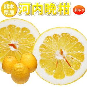 河内晩柑 訳あり 和製グレープフルーツ 8kg 送料無料  熊本県産 みかん 蜜柑 ミカン 柑橘 フルーツ