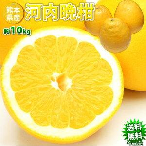 河内晩柑 送料無料 訳あり 10kg 箱込 内容量9kg+補償分500g ジューシーオレンジ 和製グレープフルーツ みかん ミカン 蜜柑