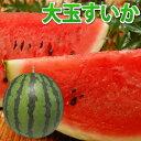 すいか 送料無料 大玉スイカ 熊本県産 ご自宅用 訳あり 西瓜 1玉 約5kg~6kg