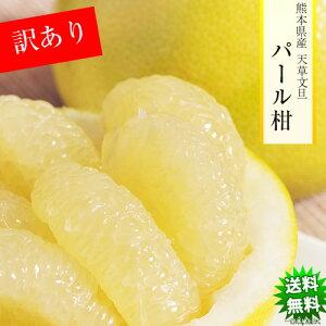 パール柑 みかん 5kg 送料無料 訳あり 熊本県産 蜜柑 ミカン 柑橘 フルーツ
