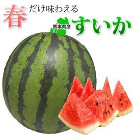 スイカ 送料無料 すいか 熊本県産 お取り寄せ 1玉 4~5kg 送料無料 くまもと 西瓜