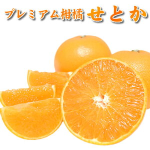 せとか みかん 2kg 送料無料 秀品 熊本県産 蜜柑 ミカン 柑橘 フルーツ