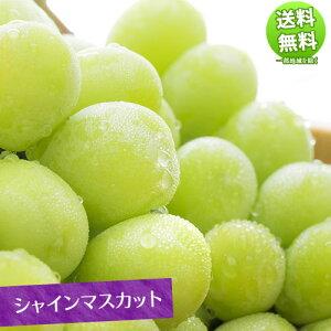シャインマスカット 2kg 送料無料 ぶどう ブドウ 葡萄