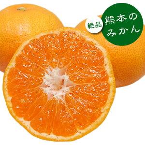 みかん 10kg 送料無料 秀品 熊本県産 蜜柑 ミカン 柑橘 フルーツ 極早生 早生