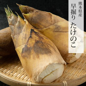 たけのこ 送料無料 竹の子 筍 タケノコ 早堀り 約4kg 目安4本〜12本