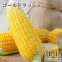 【送料無料】熊本県産 とうもろこし ゴールドラッシュ 5本入り (3L~L サイズ) 朝採り 生で食べられる スイートコーン 糖度 メロン並み 2セット購入で+...