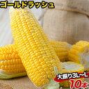 メロン並みの甘さ 生で食べられる 熊本県産 とうもろこし ゴールドラッシュ 10本入り (3L~L サイズ) 【送料無料】 朝…