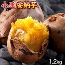 長期熟成 小玉限定 本場種子島産 訳あり 安納芋 1.2kg 小玉 2S〜3Sサイズ限定 【送料無料】 さつまいも 《3-7営業日以…
