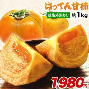 【送料無料】熊本県産 「規格外訳あり」ばってん甘柿(種なし)約1kg (3~5玉) 柿 甘柿《10月上旬-10月下旬頃より順次出荷》