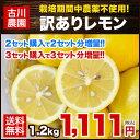 【栽培期間中農薬不使用】長崎県産『古川農園』訳ありレモン1箱1.2kg(約8玉〜12玉前後)2セット購入で2セット分おまけ…