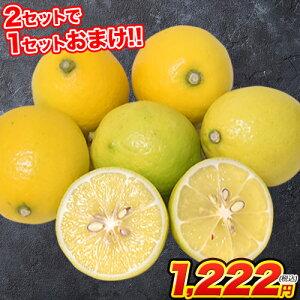 訳あり レモン 1.5kg 送料無料 熊本県産 (約5玉-15玉前後) 2セット購入で1セット分おまけ、3セット購入で2セット分おまけ※/サイズ不選別/複数セットの場合1箱にまとめて配送《3-10営業日以内に
