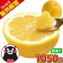 和製 グレープフルーツ 河内晩柑 1.5kg 送料無料 河内 晩柑 熊本県産 旬 の みかん 2セット購入で1セット・3セットな…