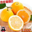 和製グレープフルーツ 河内晩柑 1.5kg 送料無料 河内 晩柑 熊本県産 旬 の みかん 2セット購入で1セット・3セットなら…