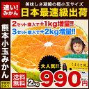 【送料無料】★日本最速級9月出荷の元祖「極早生みかん」★家庭用訳あり熊本小玉みかん(一番乗りもぎたてタイプ)2kg【…