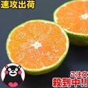 小玉 みかん 2kg 速攻出荷 訳あり 送料無料 熊本 3s~s 2s サイズ 小粒 みかん小粒 温州 家庭用 果物 柑橘 九州 産地直…