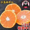 小玉 みかん 完熟 2kg 訳あり 送料無料 熊本 3s~s 2s サイズ 小粒 みかん小粒 温州 家庭用 果物 柑橘 九州 産地直送 …