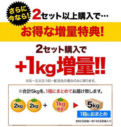 ★★日本最速級9月出荷「熊本小玉みかん」家庭用訳あり2kg★【送料無料】【2セット購入で+1kg増量】3S〜Sサイズ混合※複数セット購入の際1箱おまとめ《9月中旬〜9月末頃より順次出荷》