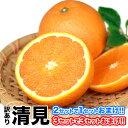 訳あり 清見 1.5kg / 約6〜約20玉前後入 送料無料 熊本産 柑橘 旬 の みかん 2セット購入で1セット分、3セット購入なら3セット分増量 《3-7営...