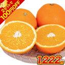 【2セット購入でクーポンで100円OFF】 ネーブル オレンジ 1.5kg 送料無料 訳あり 安心安全 熊本県産 旬 の みかん 2セ…