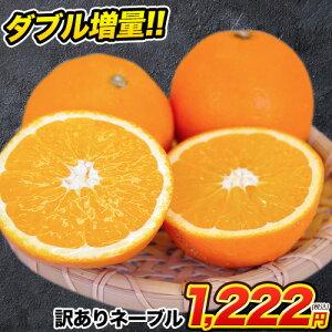 ネーブル オレンジ 1.5kg 送料無料 訳あり 安心安全 熊本県産 旬 の みかん  2セット購入で1セット 3セット購入なら3セット増量 ※複数購入の場合1箱におまとめ配送  《1月下旬-2月中旬頃より順