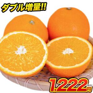 ネーブル オレンジ 1.5kg 送料無料 訳あり 安心安全 熊本県産 旬 の みかん  2セット購入で1セット 3セット購入なら3セット増量 ※複数購入の場合1箱におまとめ配送  《3月中旬-4月上旬頃より順