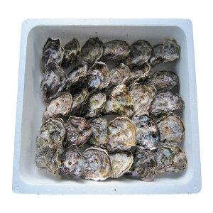 殻付き牡蠣30個 生食用 熊本 天草産真牡蠣 生ガキ