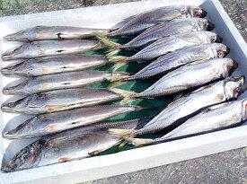 【冷凍】魚作商店 あじ 干物 丸干し 一夜干し 大サイズ 1kg 業務用