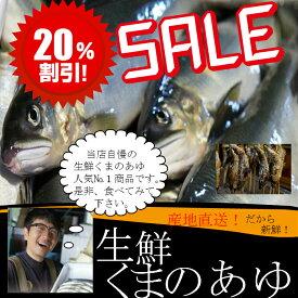 生鮮あゆ(くまのあゆ)13尾〜15尾入おつまみ、酒の魚、塩焼きに最適!超美味い!