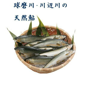 球磨川 川辺川の天然鮎【冷凍】1kg