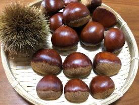 【予約商品】栗 訳ありSサイズ 生栗 1kg 熊本県 球磨郡産