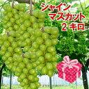 入荷しました!熊本県産 シャインマスカット1.8〜2kg 送料無料 産地直送 最高級 ギフトに最適 秀品 訳あり では有りま…
