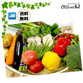 野菜のプロが厳選した新鮮お野菜セット8品以上 送料無料詰め合わせ通販 野菜セット 九州 お買い得 お試しコロナ対策