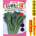 【メール便】【ウタネの種 よりどり4品以上で送料無料】ウタネ にいがたとう菜 6137寒さに強く、やわらか美味しい